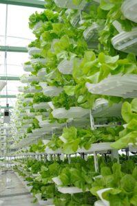 Vertical Farming_The Health Sciences Academy_Creadit Valcenteu